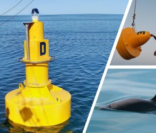 Sealite Buoys and Lanterns Mark Protected Habitat for Endangered Species<br>(Multiple Languages)