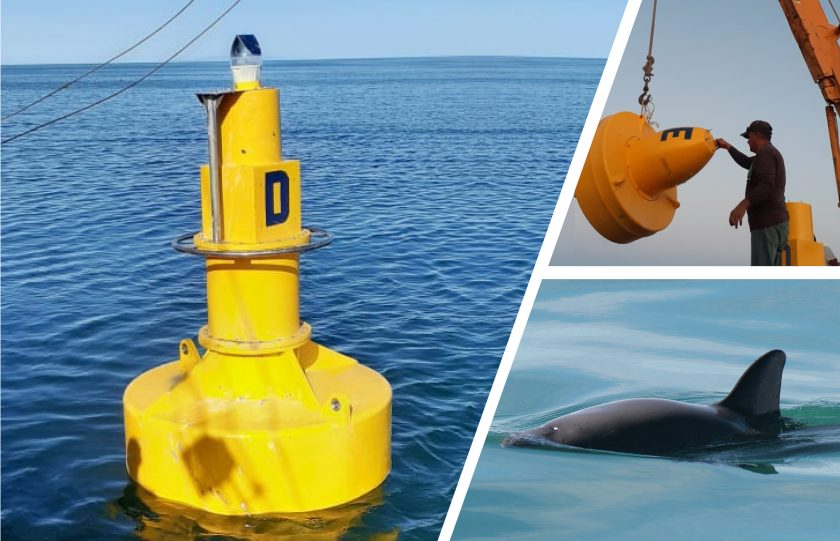 Sealite Buoys and Lanterns Mark Protected Habitat for Endangered Species (Multiple Languages)