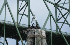 Customised Bridge Lighting Solution for McCullough Bridge